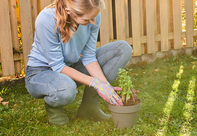 Grow Garden Wall